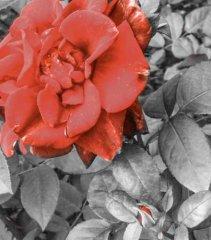 PSX_20150211_120757.jpg