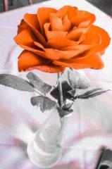PSX_20150211_201431.jpg